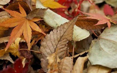 How to sell your property this autumn